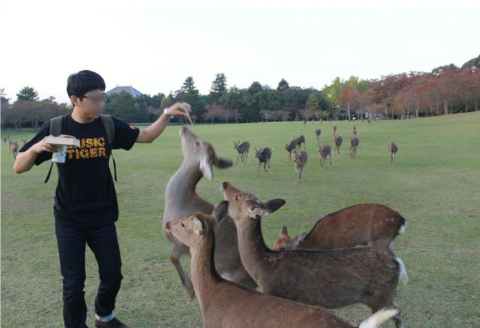 Why You Should Never Bring Food Around A Group Of Deer (4 pics)