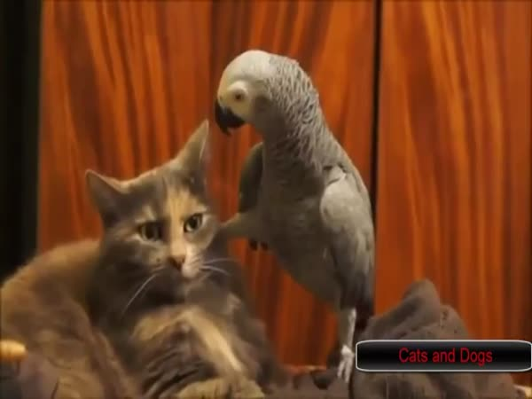Birds Annoying Cats Compilation