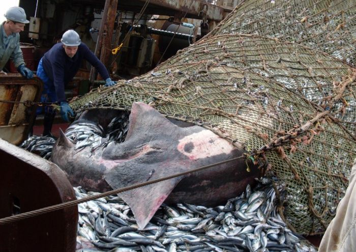 Fishermen Did Not See That Coming (8 pics)