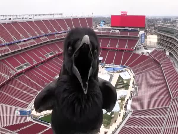 Stadium Webcam Visitor