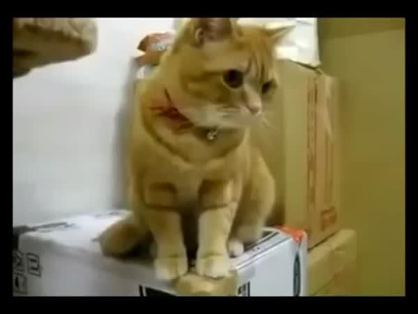 Impatient Cat Waiting on Food
