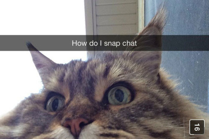 These People Are Awesome At Snapchat (22 pics)