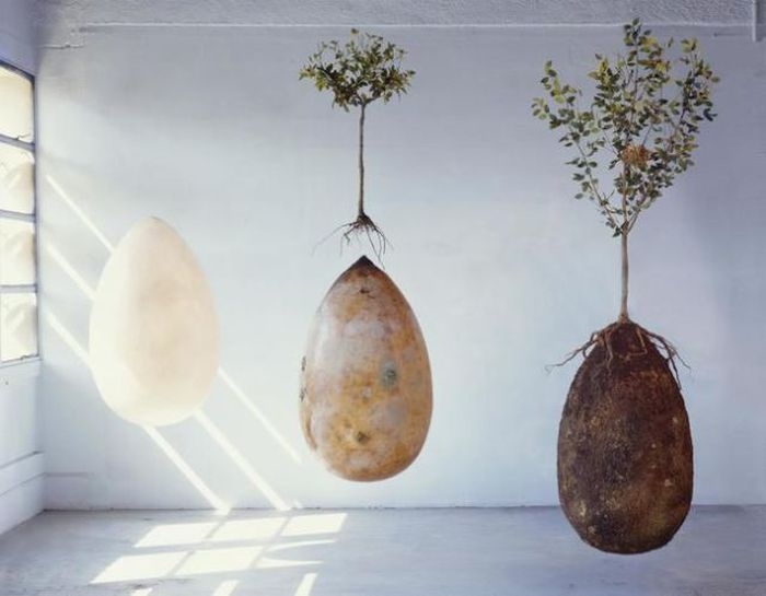 Are These The Burial Pods Of The Future? (11 pics)