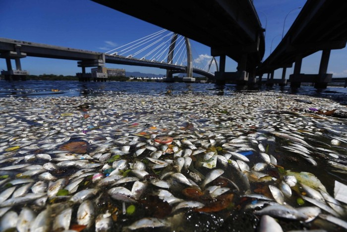Mysterious Dead Fish On The Shore Of Rio de Janeiro (11 pics)