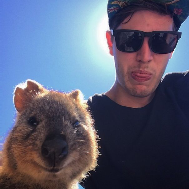 Taking Selfies With Quokkas Is The Cutest Trend In Australia Right Now (25 pics)