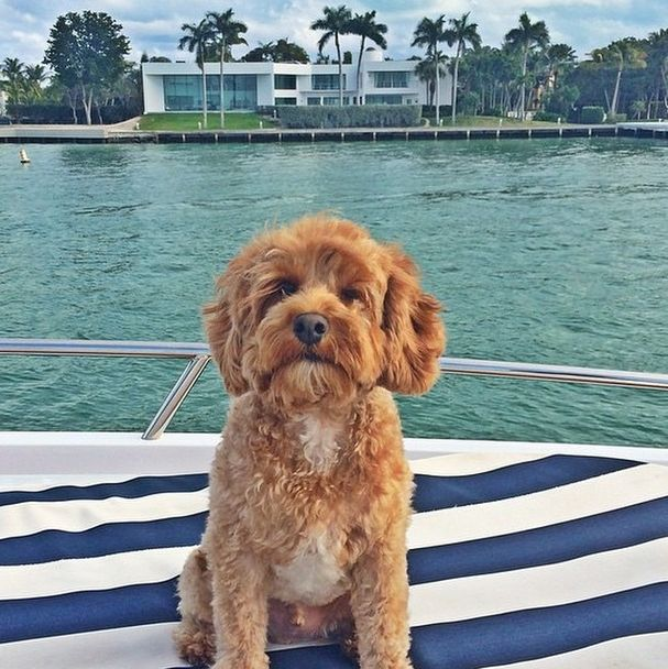 The Rich Dogs Of Instagram Are Straight Up Ballin (32 pics)