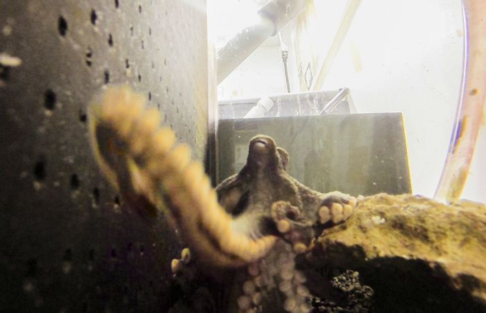 What Happens When An Octopus Steals Your Camera (2 pics)
