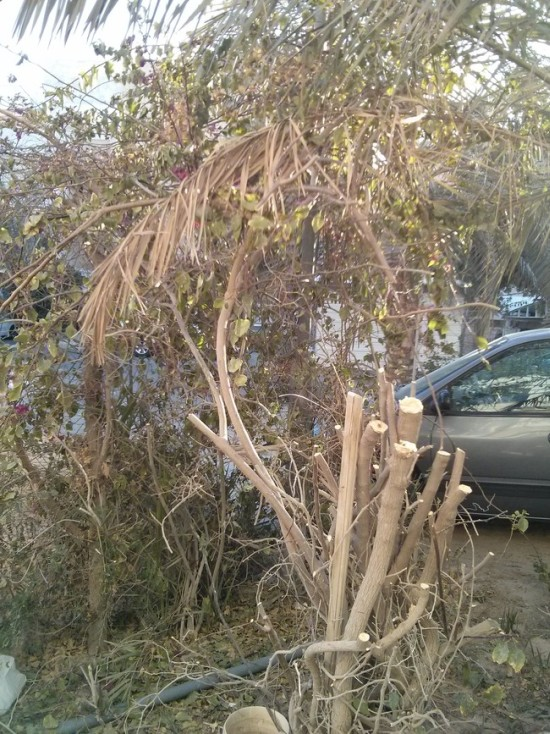 Man Gets Surprised By Something Terrible While Trimming The Bushes (6 pics)