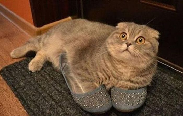 Photos Of Cats Having Way Too Much Fun (98 pics)