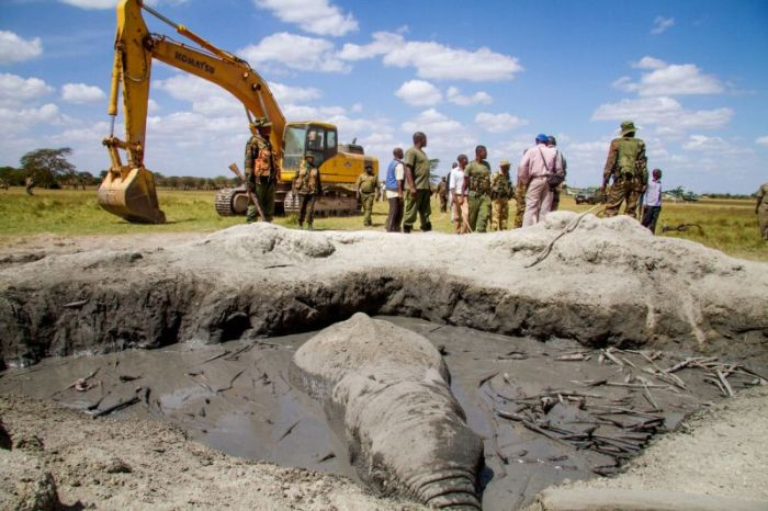 Dramatic Rescue Of An Elephant Stuck In Mud (6 pics)