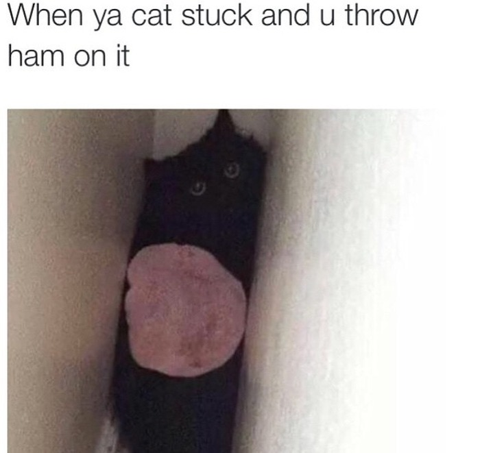 More Relatable Moments From The World Of Twitter (42 pics)