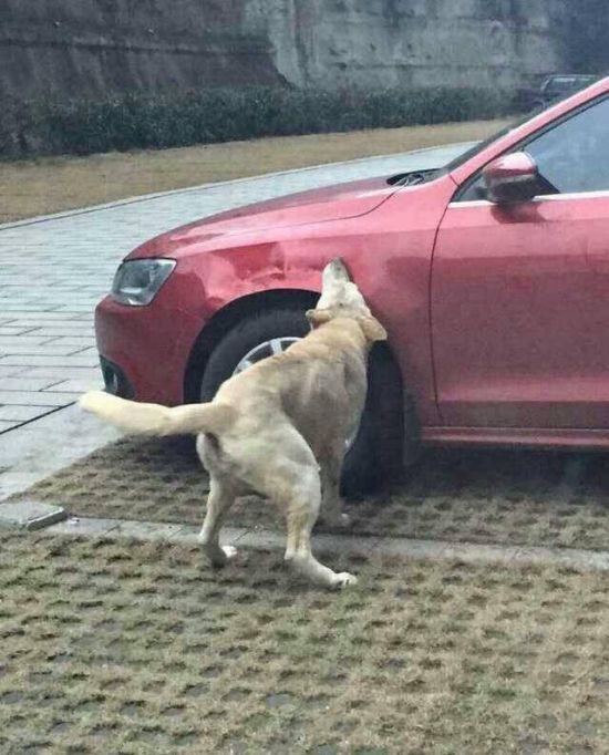 Why Is This Dog Eating A Car? (4 pics)