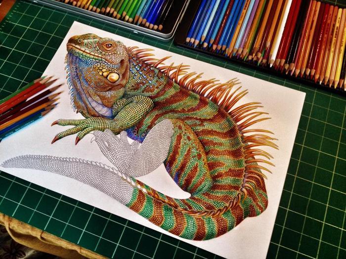 Iguana by Tim Jeffs (8 pics)