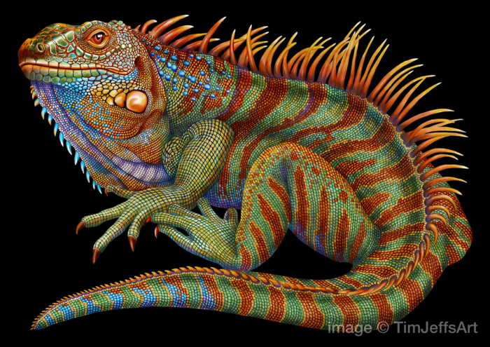 Iguana by Tim Jeffs (8 pics)