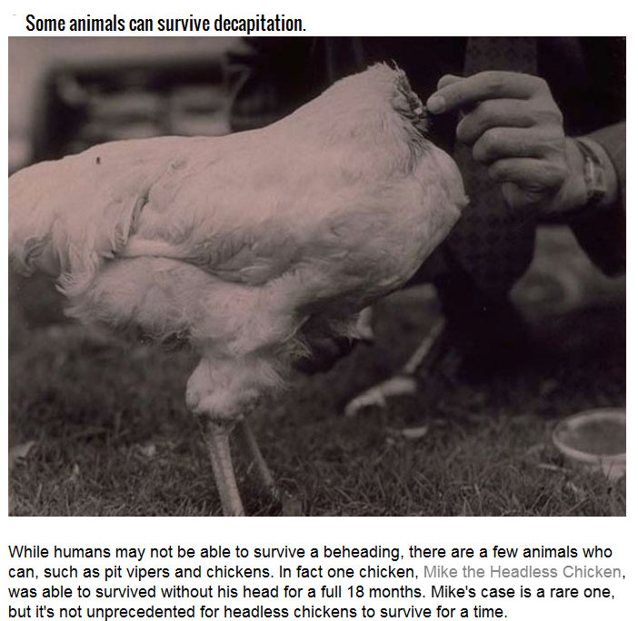 The Science Behind Human Decapitation (10 pics)