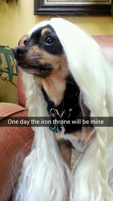 These Nerdy Snapchats Are Just Perfect (17 pics)