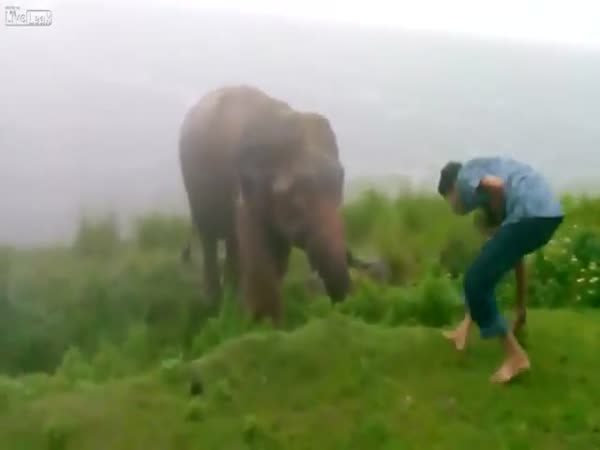 Elephant Attacked Drunken Man