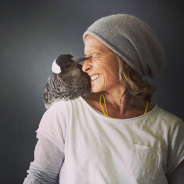 Penguin Is The Most Popular Bird On Instagram (20 pics)