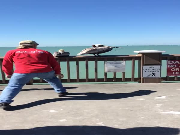 Man Saves Pelican
