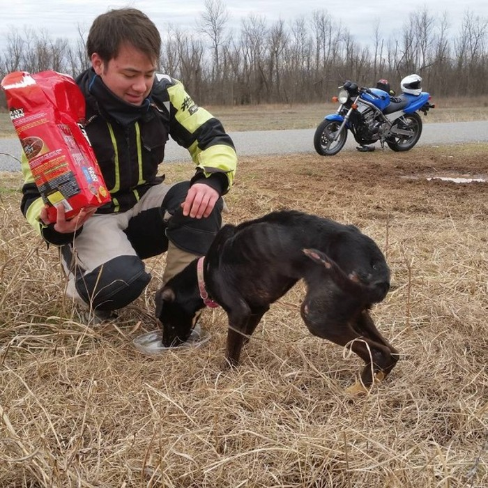 Abandoned Dog Has Been Rescued (18 pics)