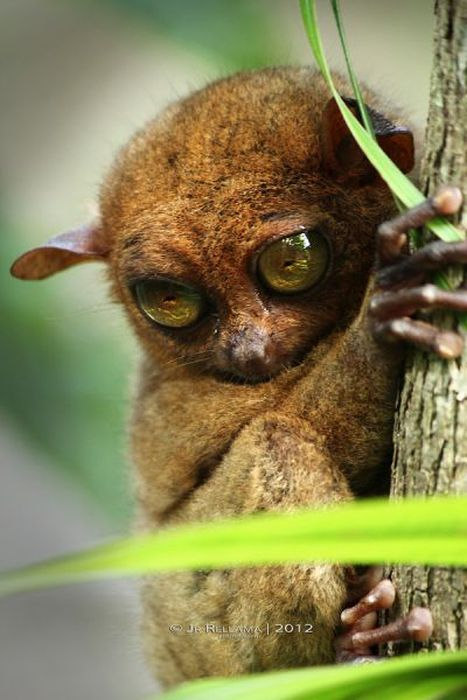 This Cute Little Creature Looks A Lot Like An Alien (55 pics)