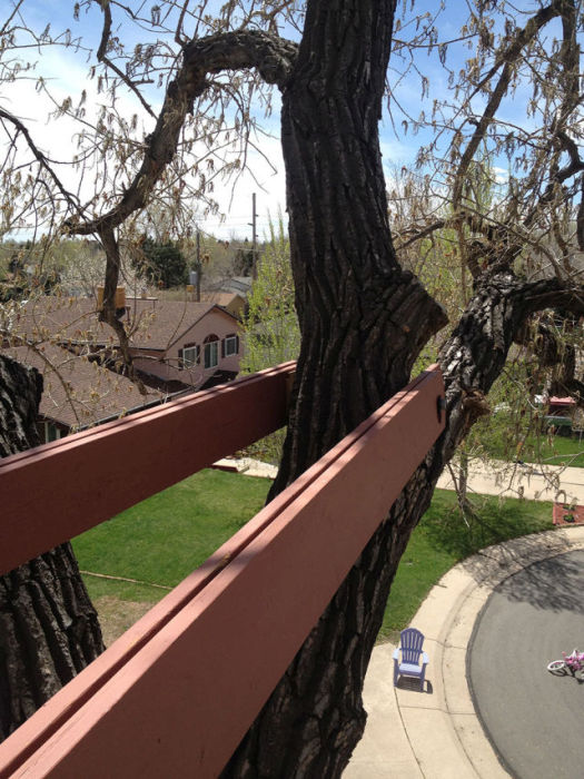 His Daughter Wanted A Tree House So He Went All Out (27 pics)