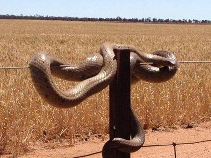 Φωτογραφίες που αποδεικνύουν Η Αυστραλία είναι το πιο τρομακτικό ποτέ χώρα (22 pics)