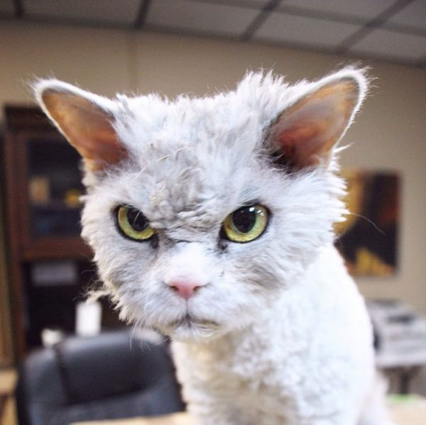 Meet Albert The Feline With A Bitchface That Rivals Grumpy Cat (20 pics)