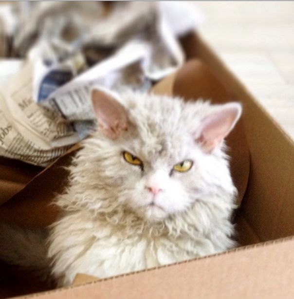 Meet Albert The Feline With A Bitchface That Rivals Grumpy Cat (20 pics)