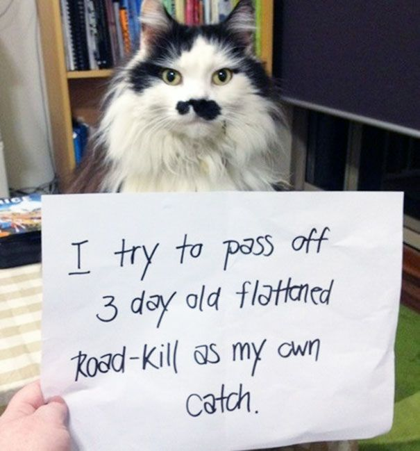 These Cats Totally Deserve To Be Cat Shamed (30 pics)