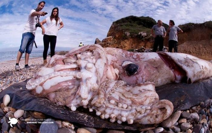 Bizarre Things Washed Ashore (10 pics)