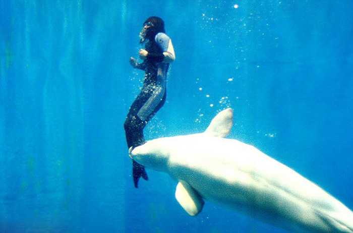 Whale Makes An Amazing Rescue Saving A Temporarily Paralyzed Diver (3 pics)