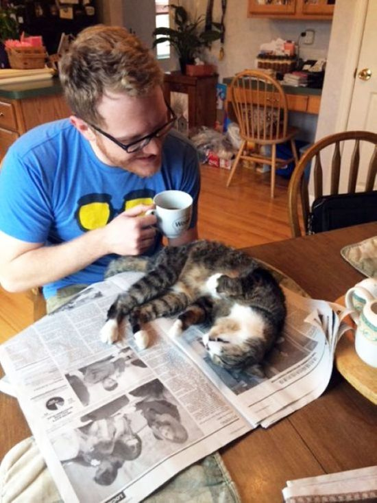 Cats That Just Don't Want Humans To Get Any Reading Done (35 pics)