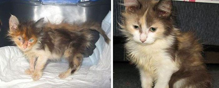 Before And After Photos Show How A Good Home Can Change A Cat (30 pics)