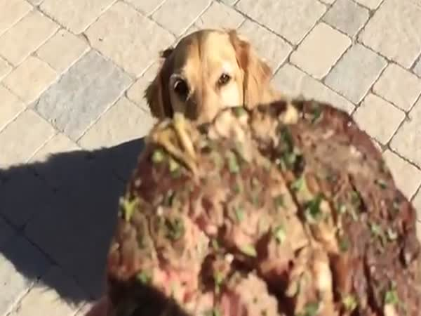 Clumsy Dog