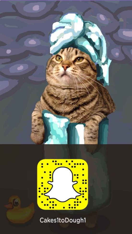 Snapchat And Cats Make A Hilarious Combination (17 Pics)