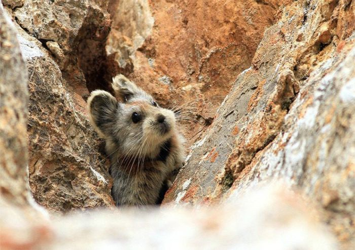Magic Rabbit Spotted For The First Time In 20 Years In China (3 pics)