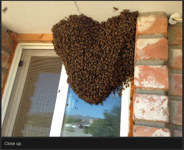There's So Many Bees (7 pics)