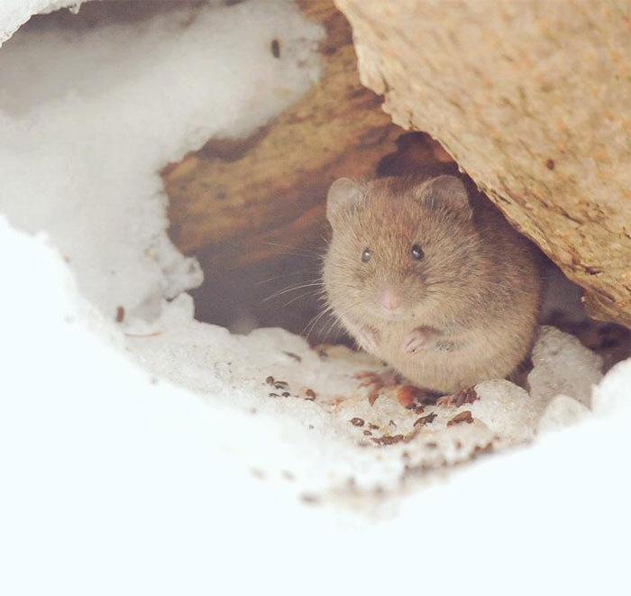 Incredibly Cute Animals (23 pics)