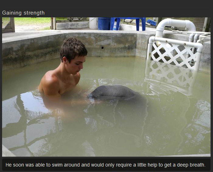This Manatee Was In Need Of Rescue (8 pics)