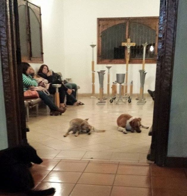 Dogs Pay Their Respects At Woman's Funeral (6 pics)