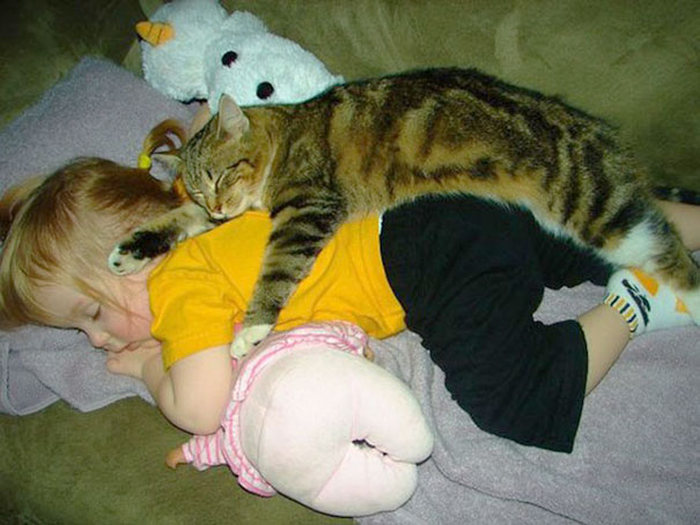 Adorable Photos That Prove Every House Needs A Cat (40 pics)