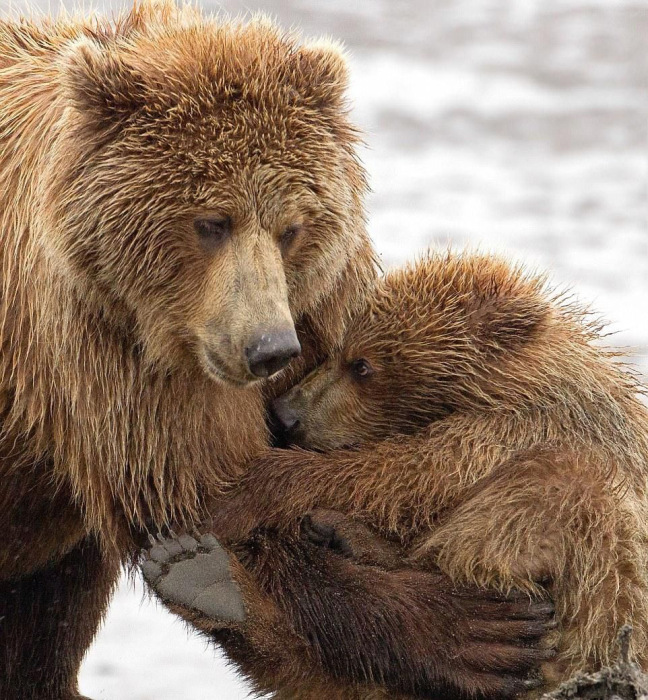This Is What A Real Bear Hug Looks Like (7 pics)