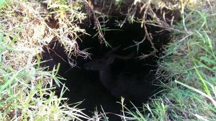 Strange Hole (3 pics)