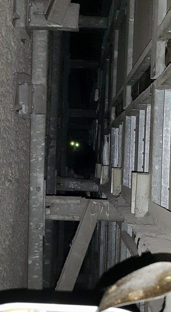 Cat Gets Stuck Behind A Subway Wall For Five Whole Years (6 pics)