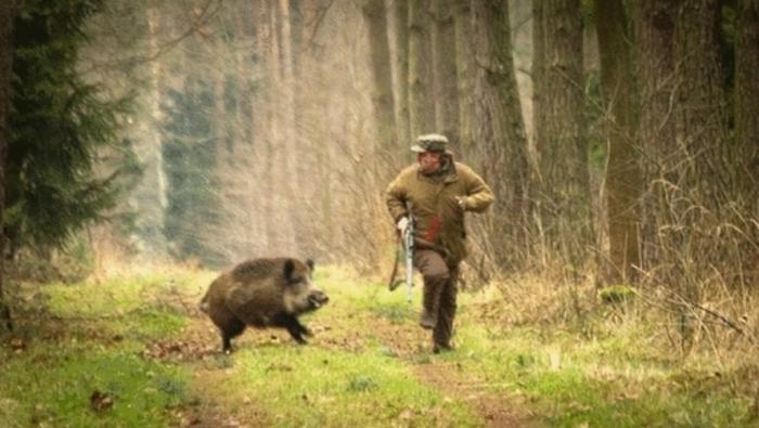 Hunter Becomes The Hunted (6 pics)