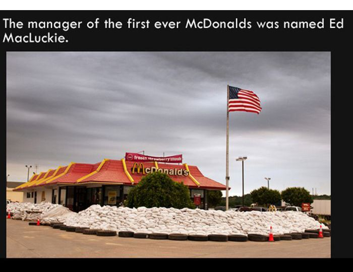 You Can Never Learn Too Many Fun Facts (15 pics)