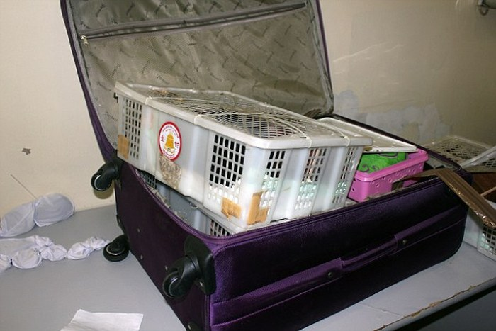 This Woman Had A Zoo In Her Suitcase (10 pics)