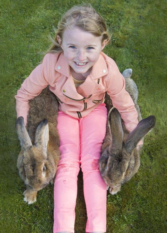 Meet Darius The World's Biggest Bunny (6 pics)