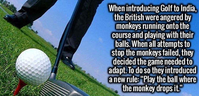 Fun And Interesting Facts That Your Brain Needs To Know (29 pics)